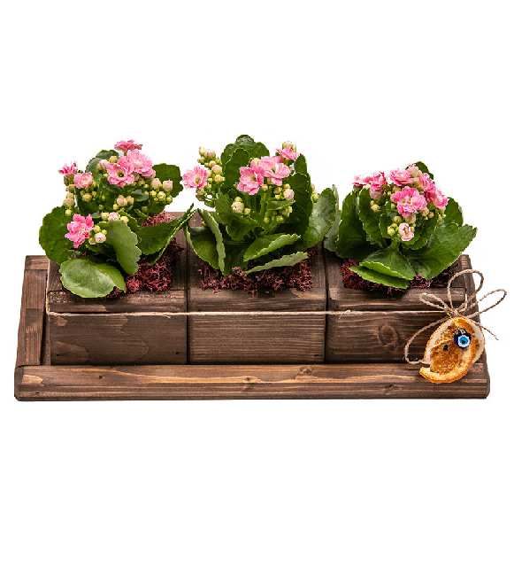 pembe çiçeğim