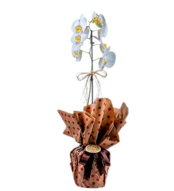 Tek Dallı Butik Orkide