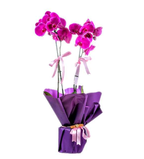 2 Dallı Butik Mor Orkide